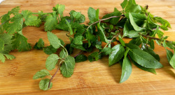 herbs for rice paper rolls