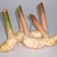 Thai Fresh galangal - 14 oz